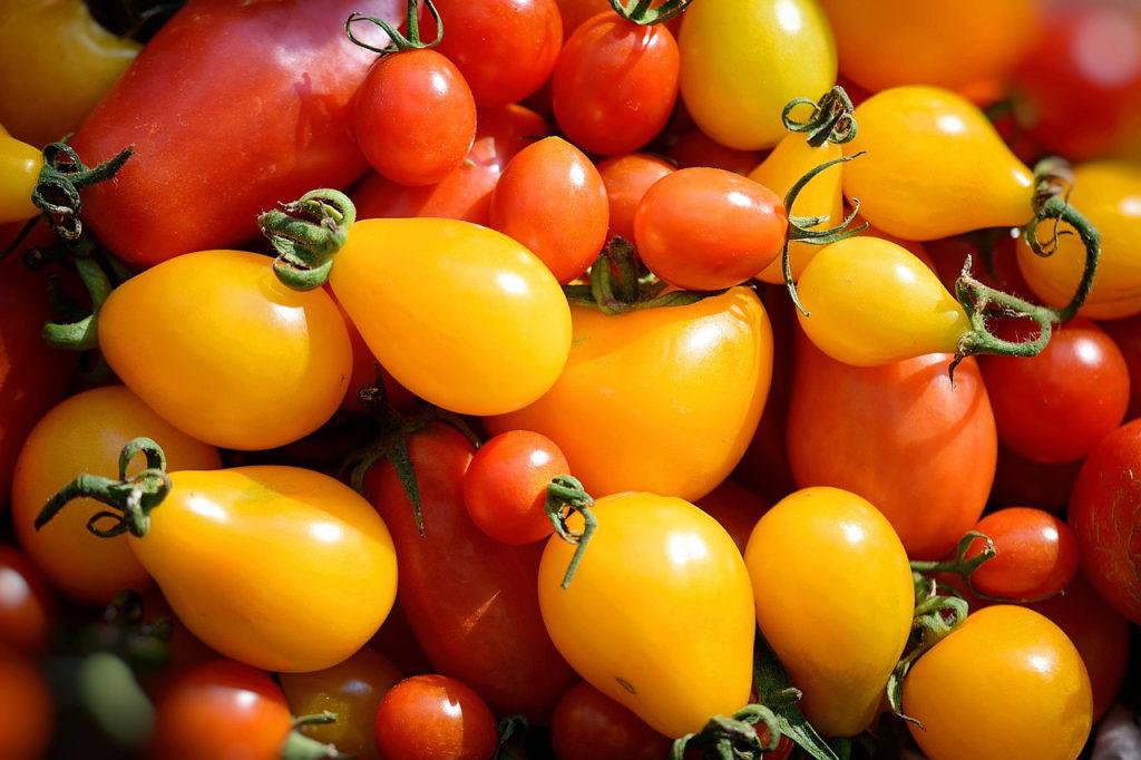 Soffio di Grano & Curiosità - Pomodorino giallo