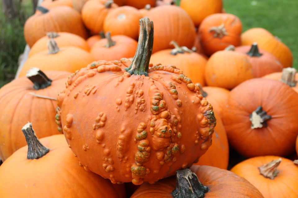 Zucca - novità di ottobre