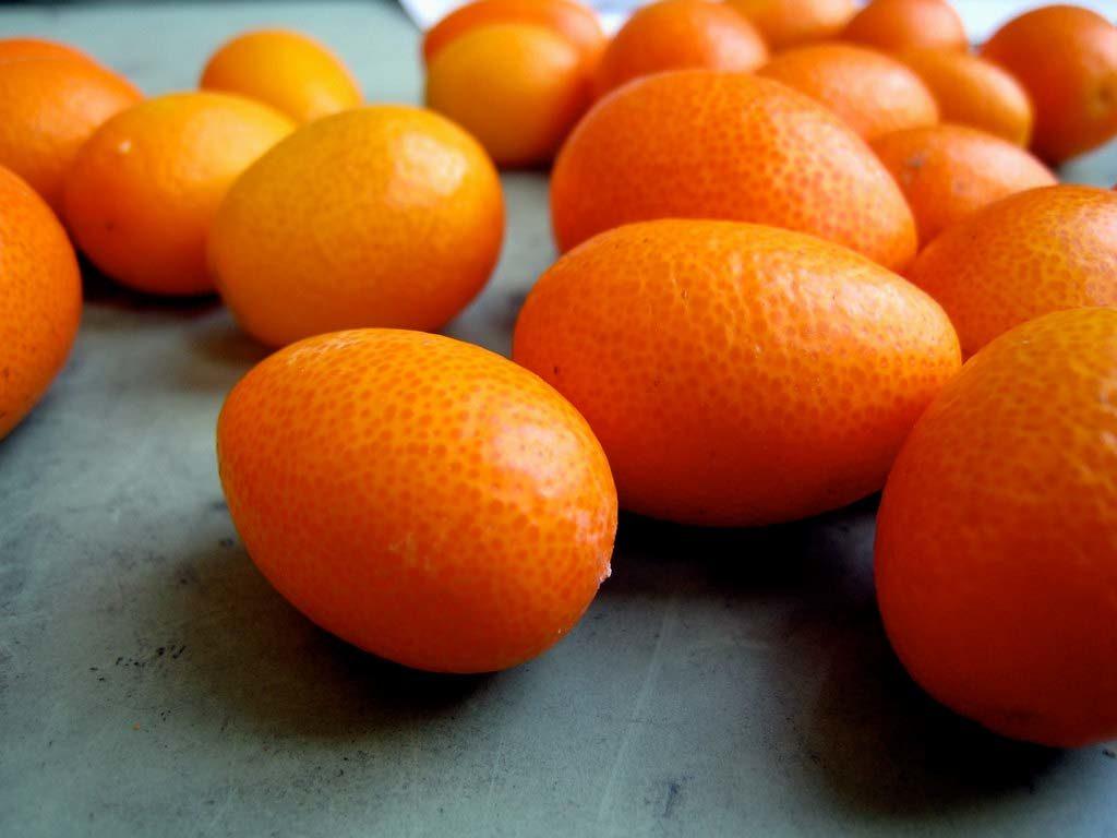 kumquat - Soffio di Grano & Curiosità - Gennaio 2019